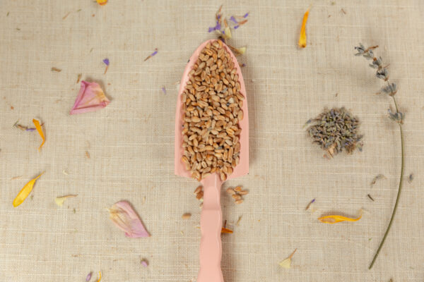 semillas para saco termico